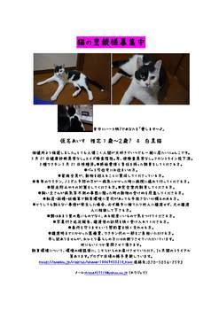仔猫の里親様募集中(アイス&クリン)_ページ_2.jpg